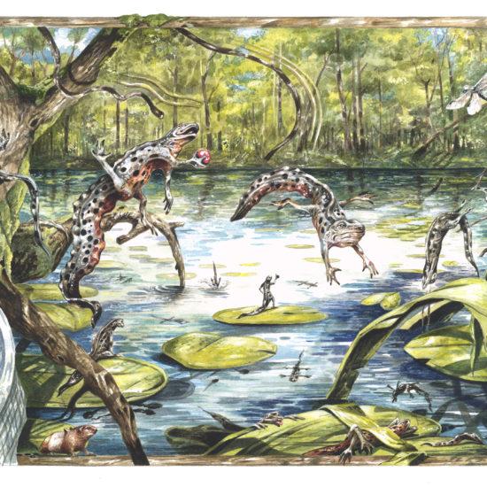 Salamandrar
